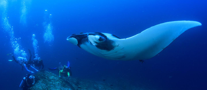 Deep Diver Course Sirolodive