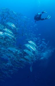 Deep Diver Course Sirolodive Phuket