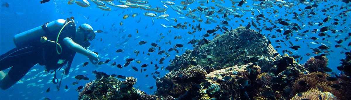 Fun Dive in Phuket