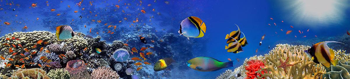 Open Water Course Phuket